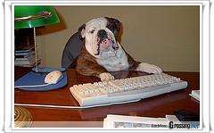 dog at desk