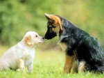 Cats and Dogs 59